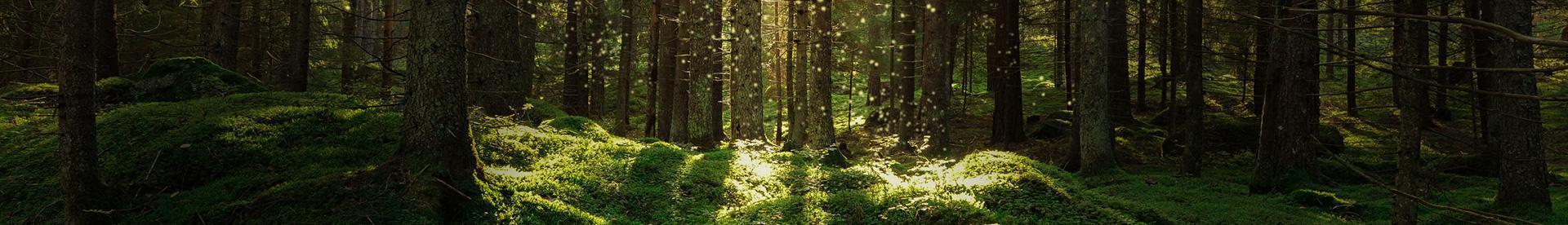 Banner - las z drzewami, zieleń